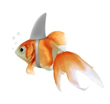 Pesce Rosso Squalo