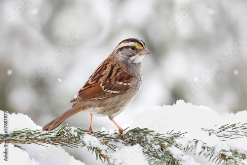 Photo  Bird In Snow