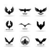 Eagles (10)