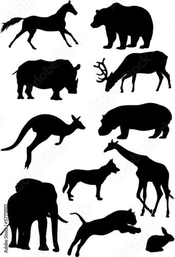sylwetki-ssakow