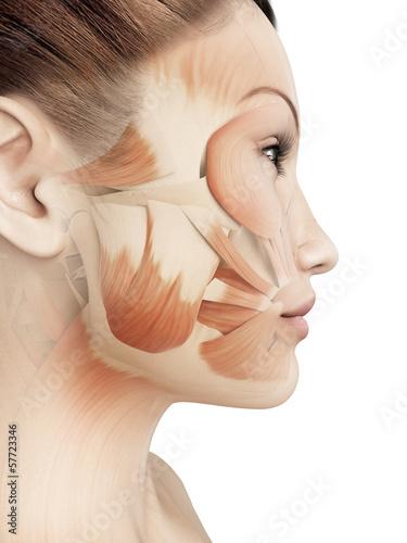 female facial muscles Fototapeta