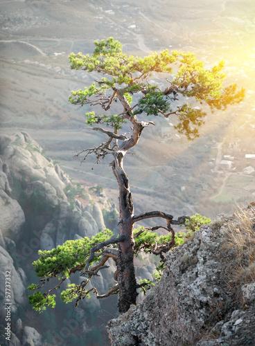 drzewo-na-skale