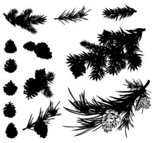 Pine Branches And Cones Black ...