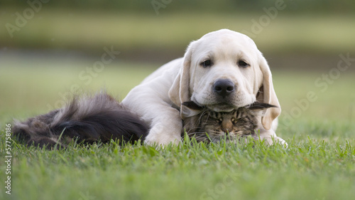 dog and kitten #57758186