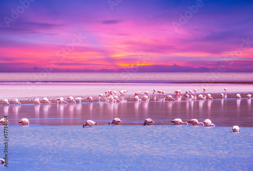 La pose en embrasure Flamingo Flamingo