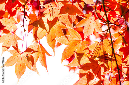 Poster Melon colorful red leaves