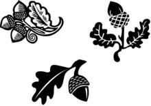 Black & White Acorn Graphic El...