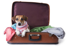 Dog Lying In A Suitcase For Tr...
