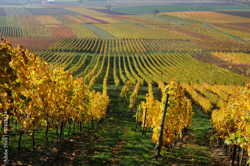 Spoed Foto op Canvas Wijngaard Autumn vineyard landscape in Rhine Valley, Germany