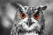canvas print picture - leuchtende Augen - Uhu
