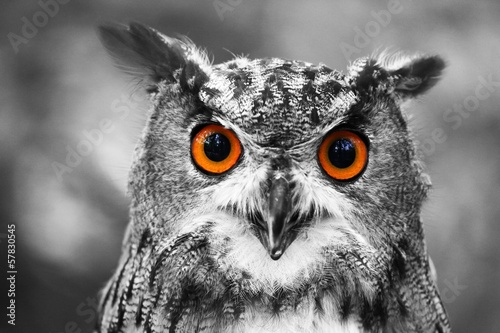 Deurstickers Uil leuchtende Augen - Uhu