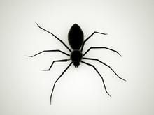 Spider Black Rendered