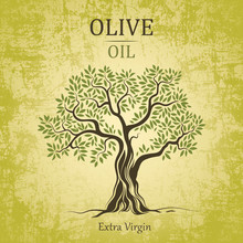 Olive Tree. Olive Oil.Vector  ...