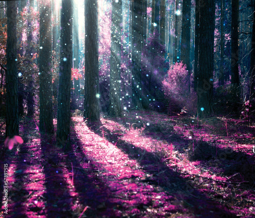 Spoed Foto op Canvas Zwart Fantasy Landscape. Mysterious Old Forest.
