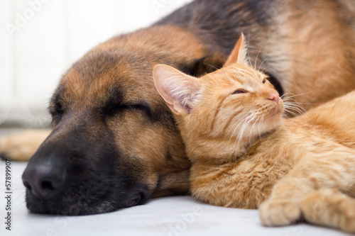 Photo  cat and dog sleeping together