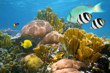 Healthy colorful coral reef