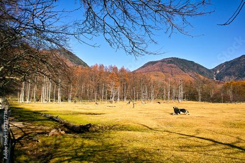Foto auf Gartenposter Wald 秋の光徳牧場