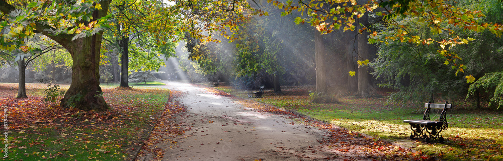 Fototapeta Path in the autumn park. Autumn Landscape.