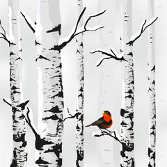 Fototapeta Birch in snow, winter card in vector