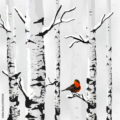 Birch in snow, winter card in vector - 57943558