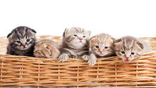 Five Small Cats Kittens In Bas...