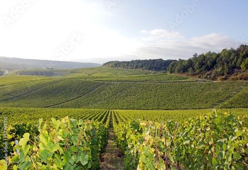 Fotografía  Vignobles de Chablis (Bourgogne France)