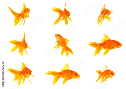 Photo Set of gold fishes