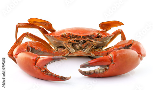 sea crab isolated on white background Wallpaper Mural