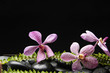Set of three pink orchid with green fern on stones
