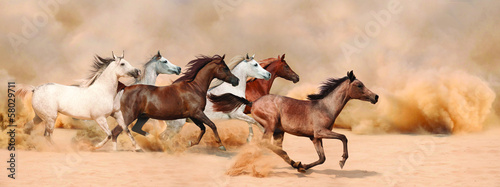 Horses herd running in the sand storm Fototapete