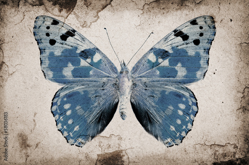 Poster Butterflies in Grunge Grunge background