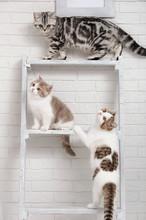 Kittens On The Shelves