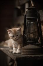 Kitten And The Kerosene Lamp
