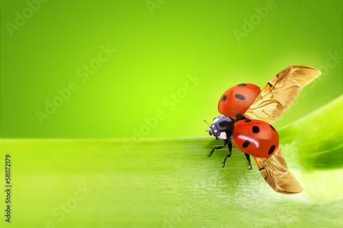 close up of a ladybug taking flight