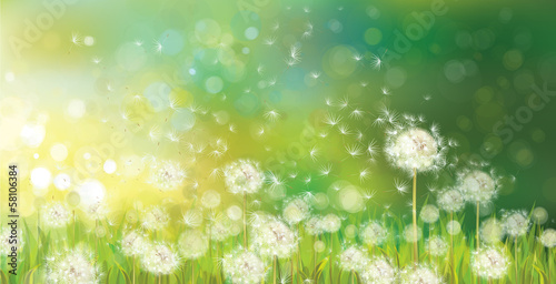 Stickers pour porte Pistache Vector of spring background with white dandelions.