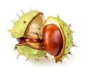Horse Chestnut In Opened Natur...