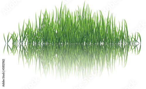 Keuken foto achterwand Paardenbloem reflective grass