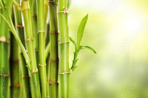 Many stalks of bamboo with leaves