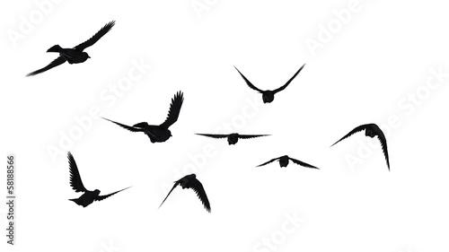 Papel de parede 鳥のシルエット