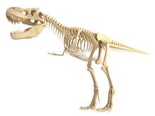 Tyrannosaurus  T Rex Skeleton