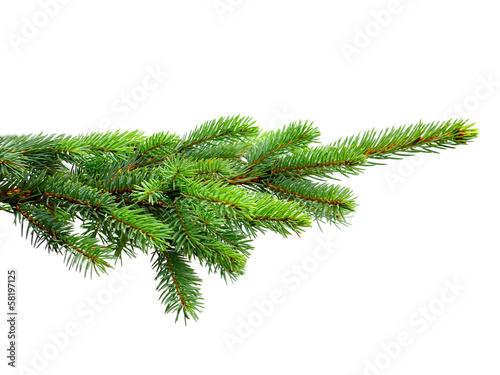 Stampa su Tela fir tree
