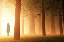 Deep Forest Fairy Tale Scary S...