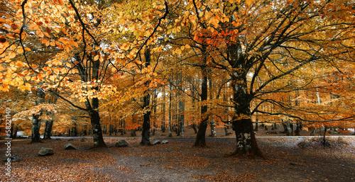 Late autumn.Urbasa Nature Park.Navarra,Spain.