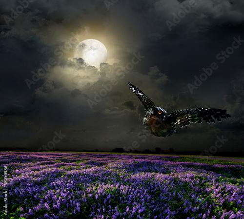 Poster Pleine lune Lavender field in the moonlight