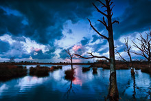 Stormy Sunset Over Bog With De...