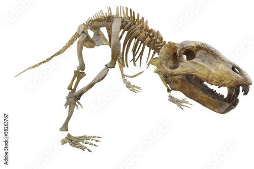 Photo  dinosaur's skeleton