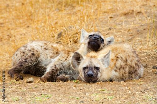 In de dag Hyena Spotted Hyena Cubs, Kruger National Park, South Africa