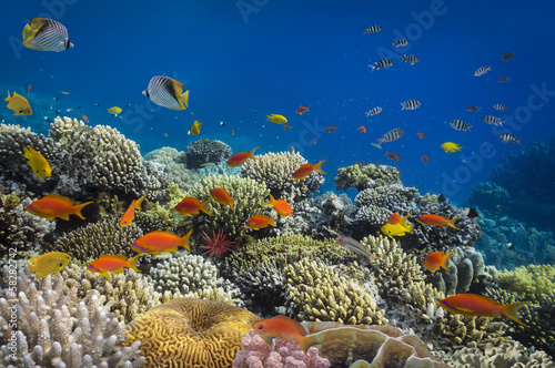 Poster Sous-marin coral reef fishes in the water