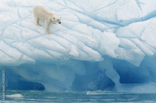 Foto op Plexiglas Arctica Oso polar