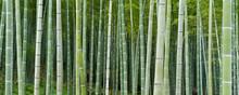 Bambuseae